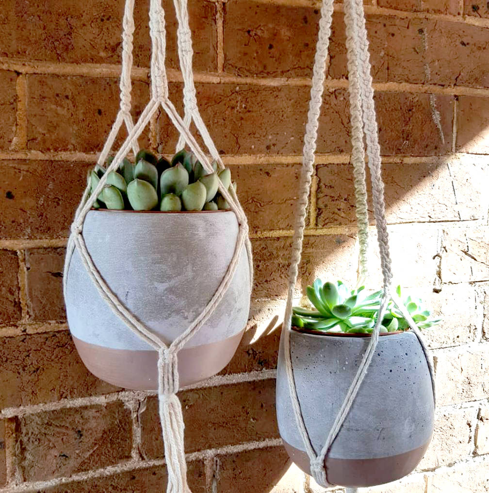 Macrame hanger with large potted succulent